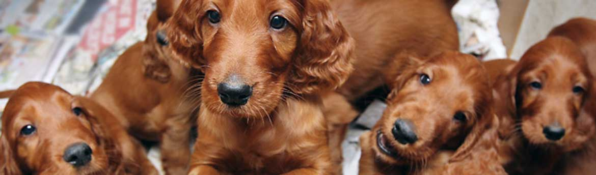 Top 100 Puppy Dog Names - www.Irishwishes.com